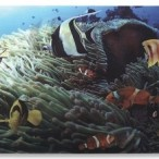 Notebook Skin, 3D Tropical Reef
